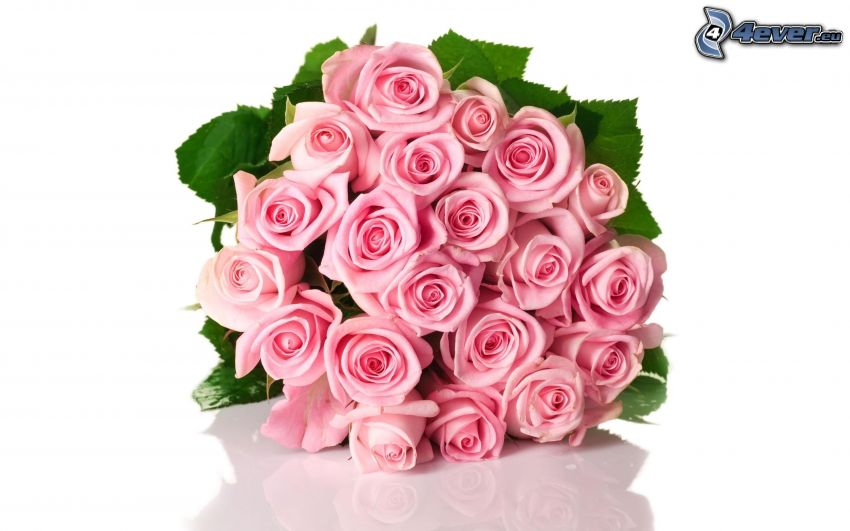 bouquet rose, rose rosa