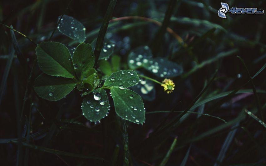erba, gocce d'acqua