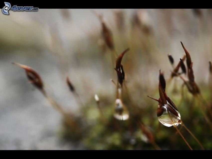fili d'erba, gocce d'acqua