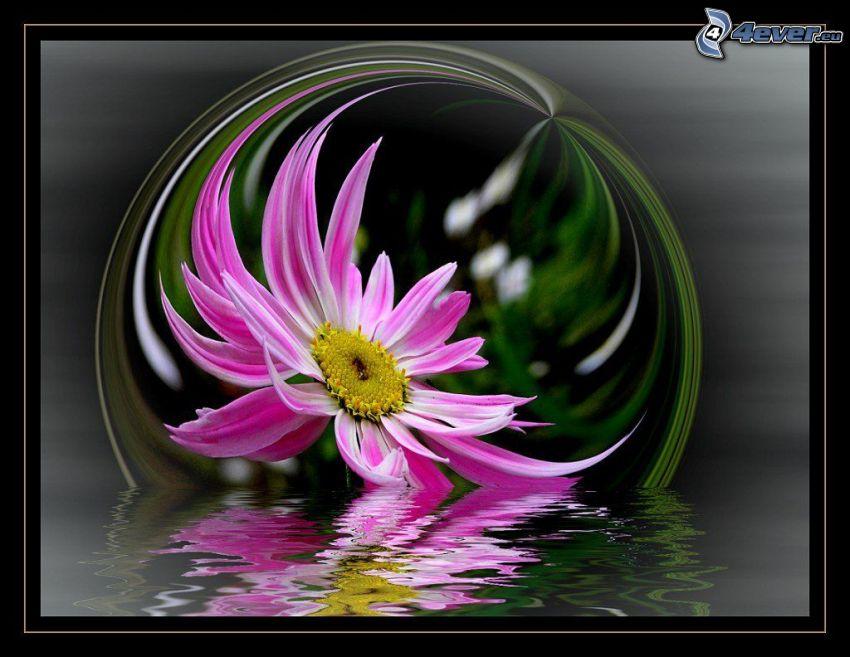 fiore rosa, bolla