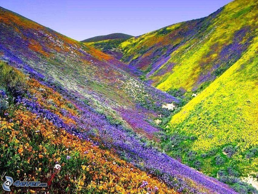 fiori colorati, colline