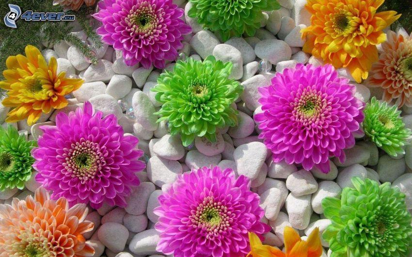 fiori colorati, pietre