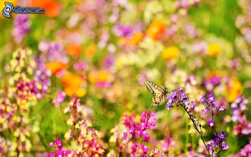 fiori di campo, farfalla sul fiore