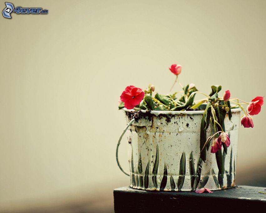 fiori rossi, secchio