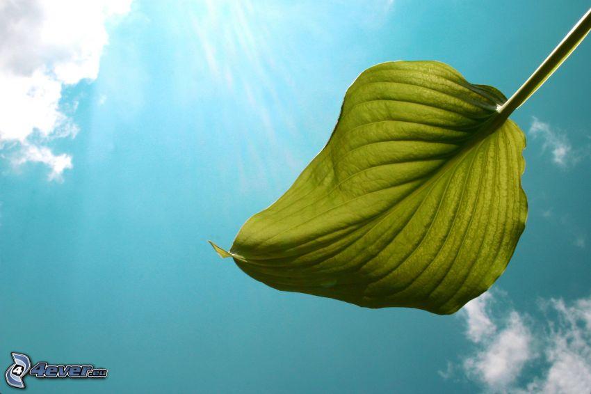 foglia verde, banano, nuvole