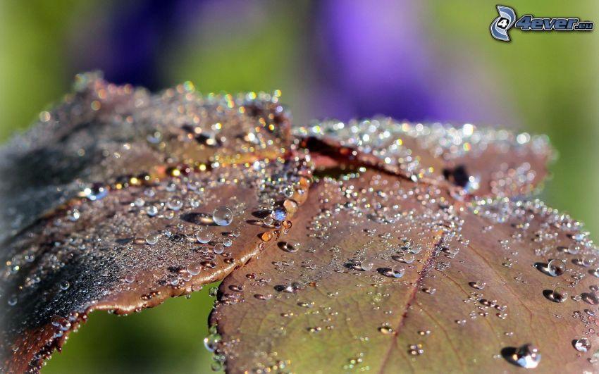 foglie coperte di rugiada, gocce d'acqua