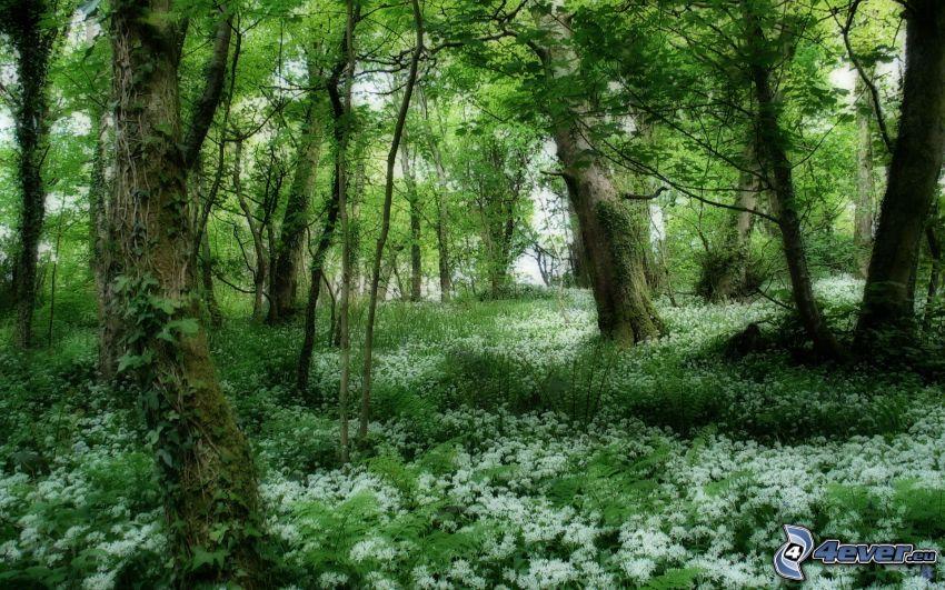 foresta, fiori, HDR
