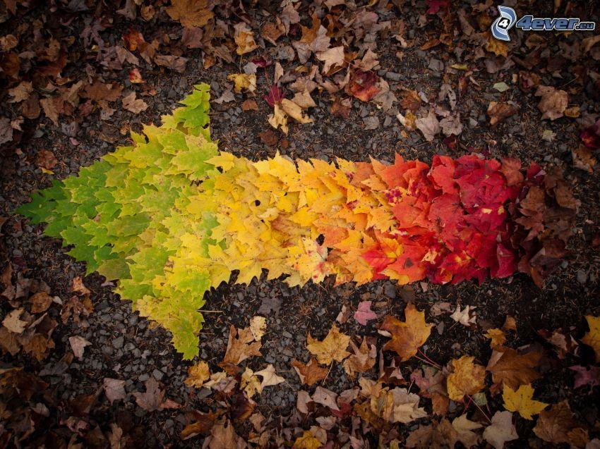 freccia, foglie colorate, autunno