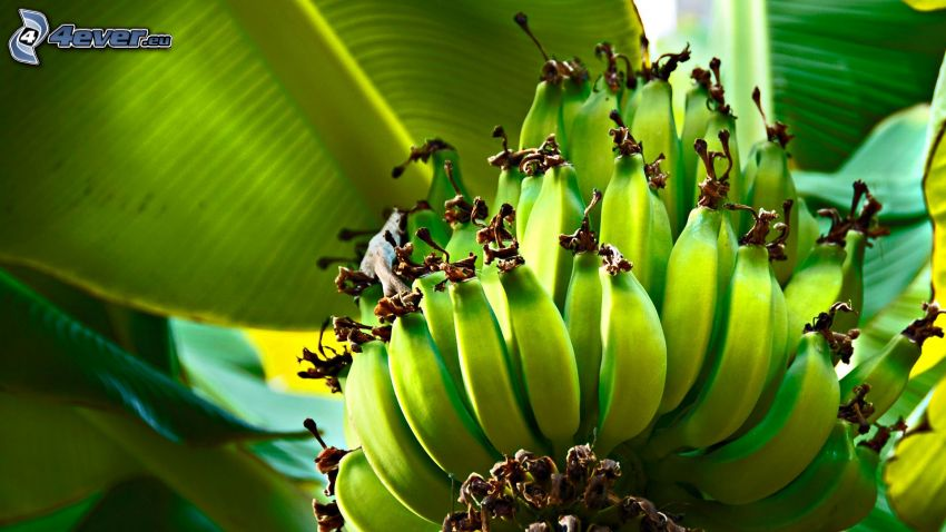 banano, banane