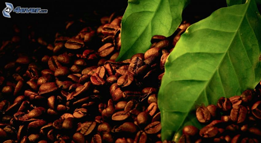 chicchi di caffè, foglie verdi