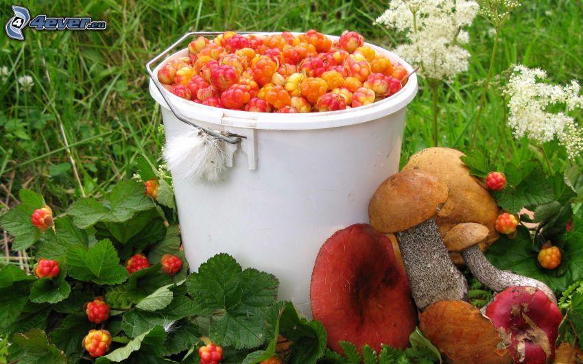 frutta di bosco, secchio, funghi