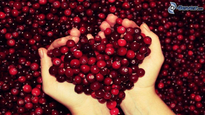 mirtilli rossi, mani, cuore