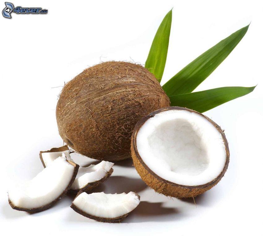 noce di cocco, foglie
