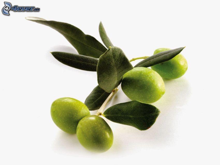 olive, ramoscello