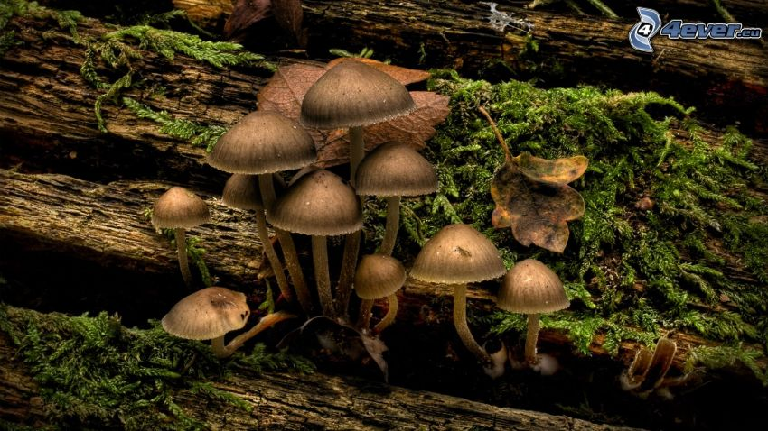 funghi, muschio, legno