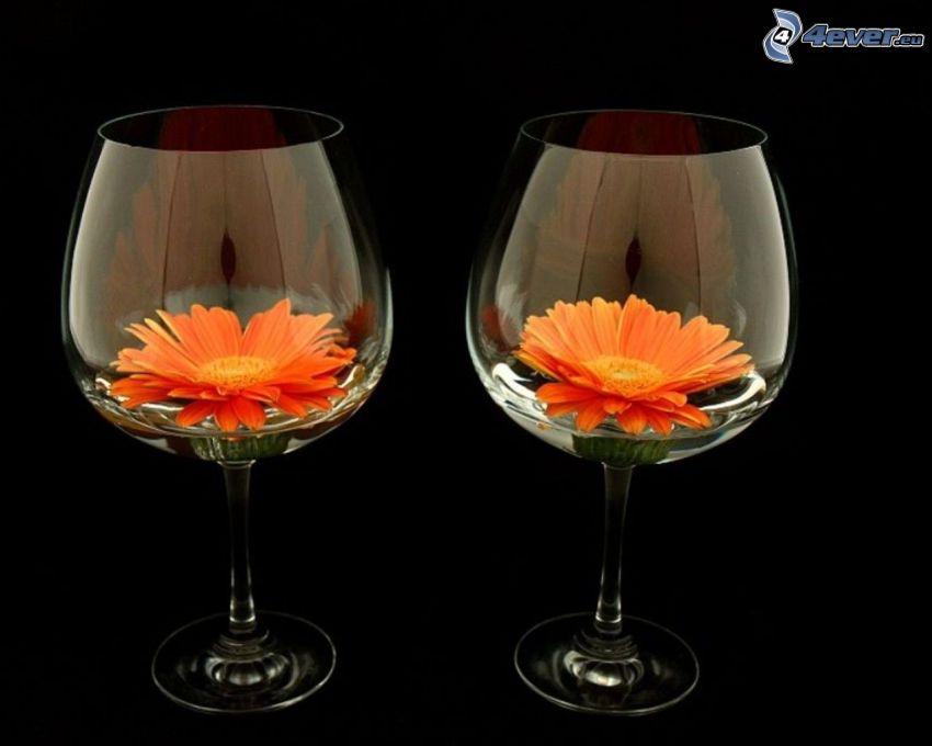 gerbera, fiori arancioni, bicchieri