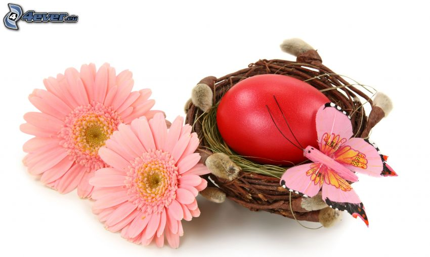 gerbera, uovo, farfalla