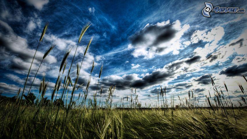 grano, nuvole, HDR