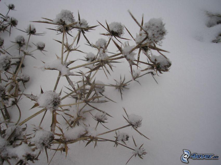 inverno, fiore