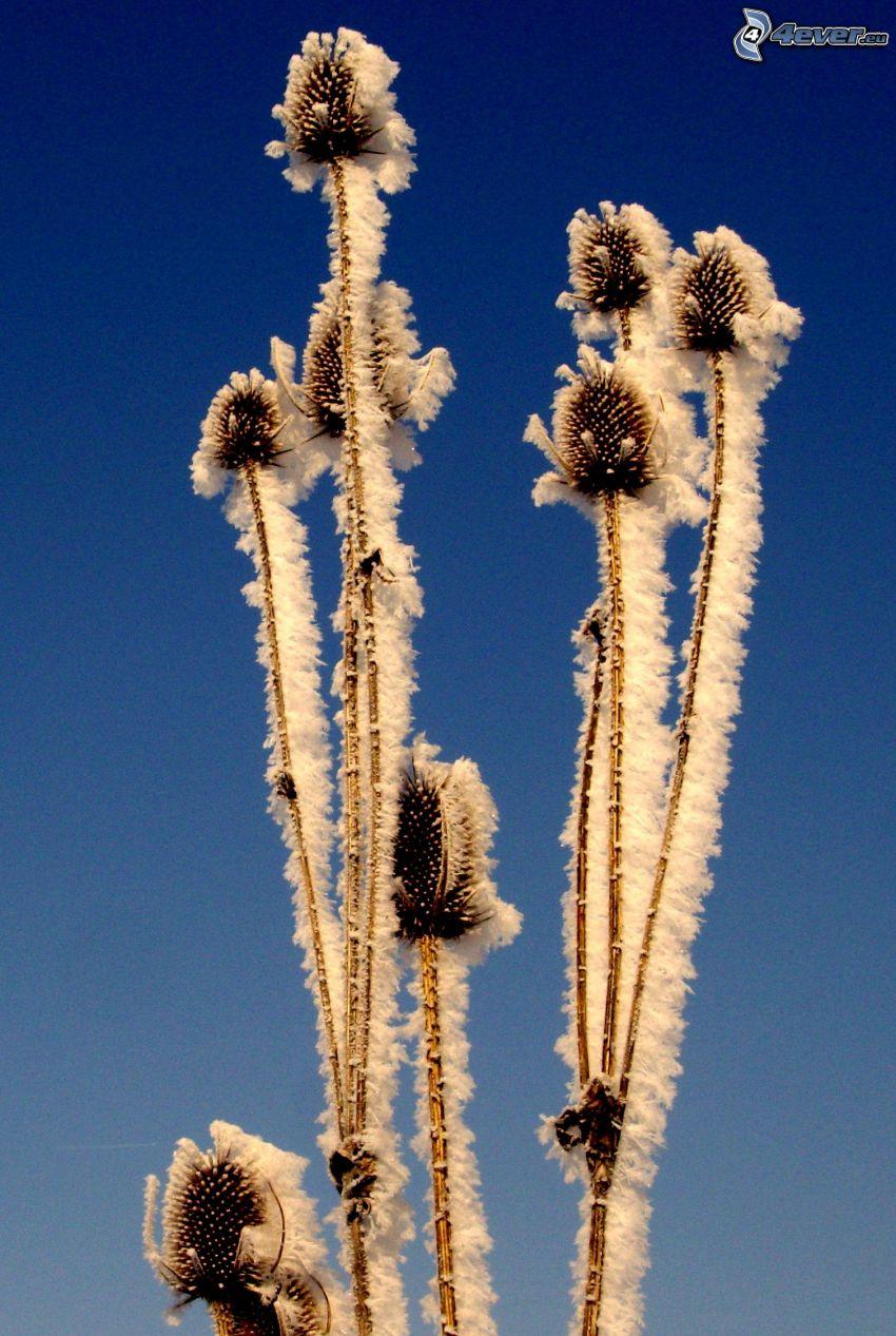 inverno, pianta