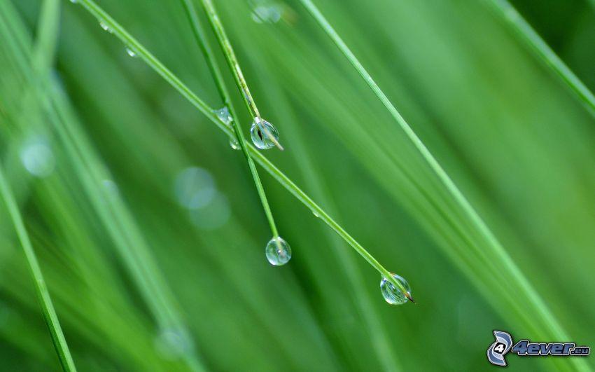 l'erba, gocce d'acqua