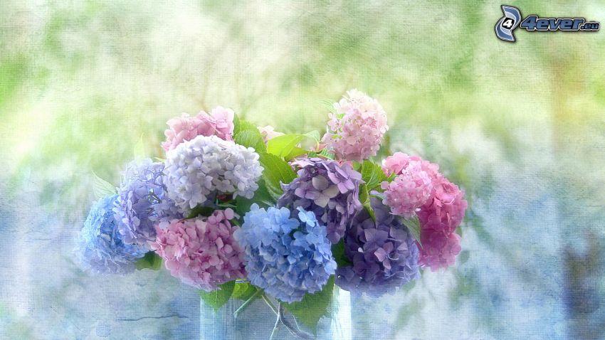 ortensia, fiori in un vaso