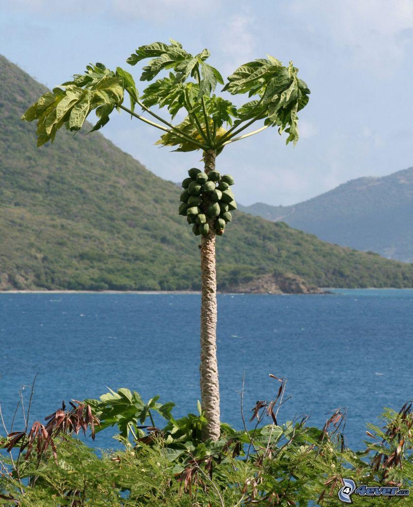 papaya, il fiume, collina