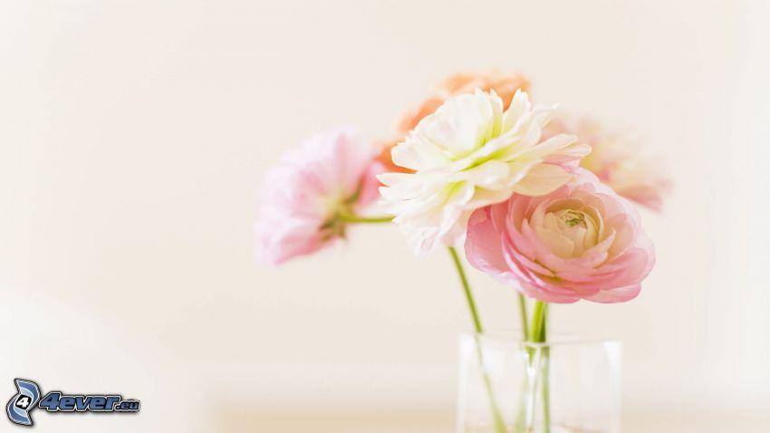peonia, fiori in un vaso