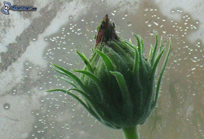 pianta, gocce d'acqua