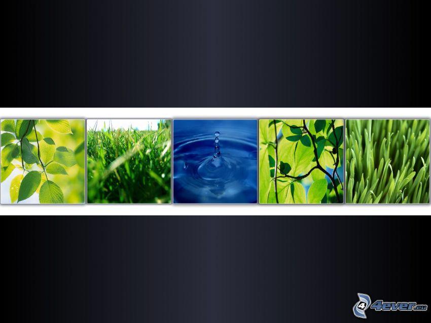 piante, acqua, panorama