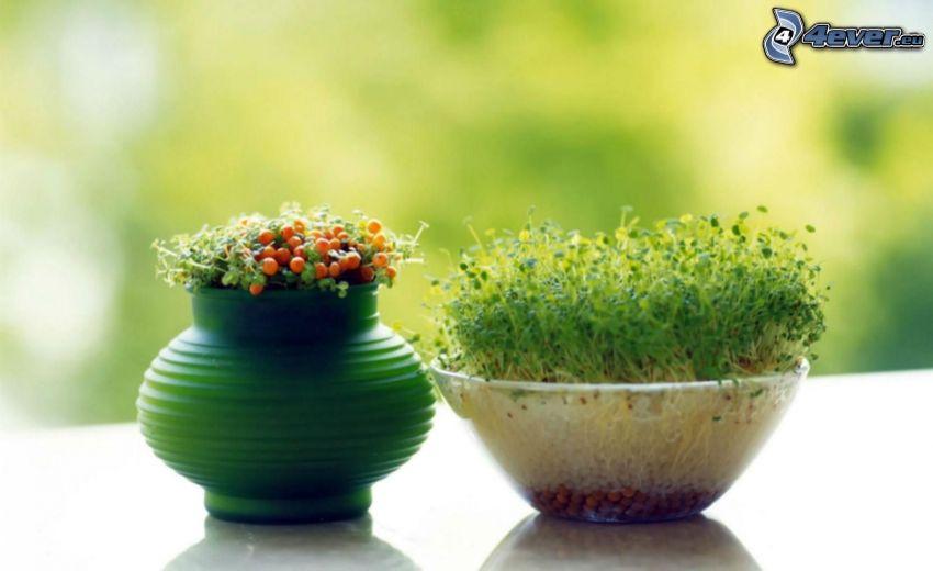 piante, bacche, vaso, ciotola