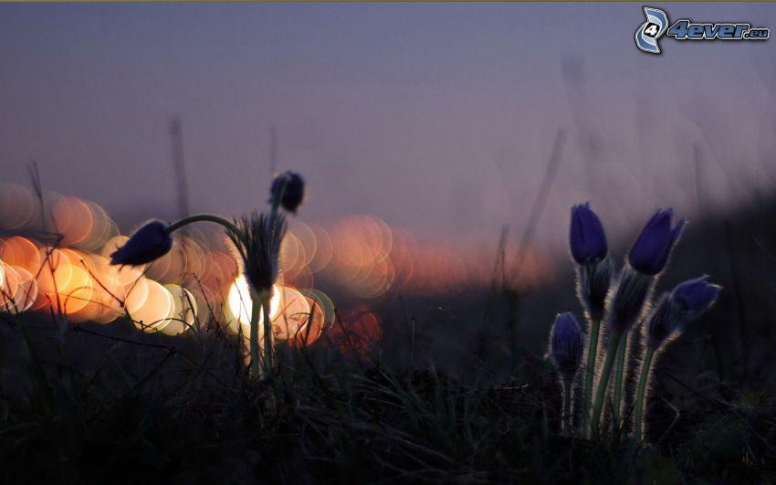 piante, luci