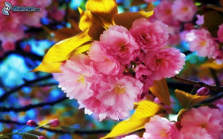 ramoscello fiorito, fiore rosa