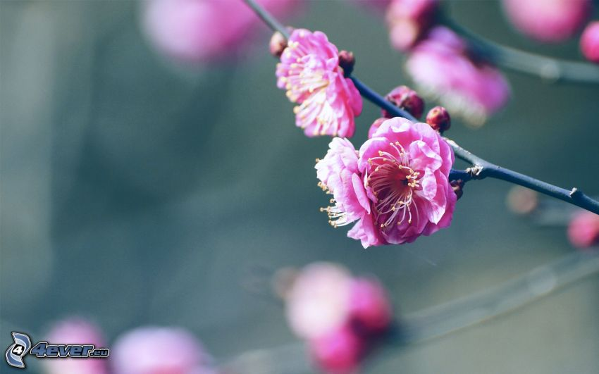 ramoscello fiorito, fiori rossi