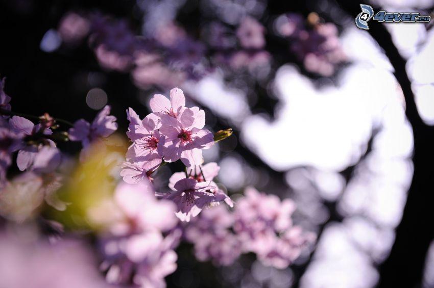 ramoscello fiorito, fiori viola