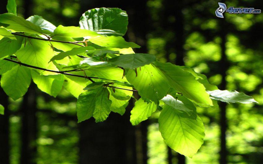 verdi foglie su un ramo