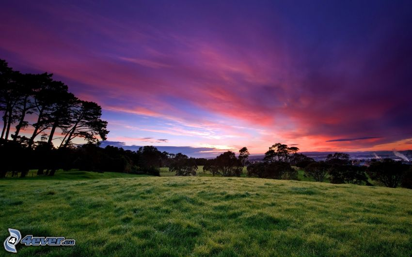 prato, alberi, cielo viola