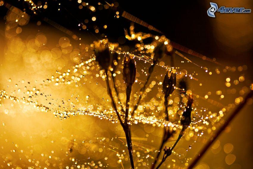 rugiada su una tela di ragno, gocce d'acqua