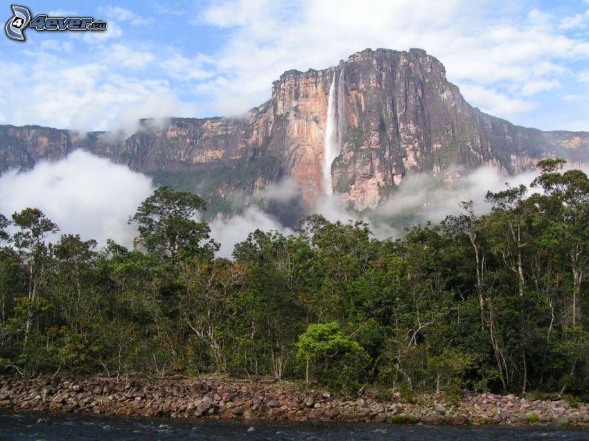 Salto Ángel, scogliera, il fiume, foresta, Venezuela