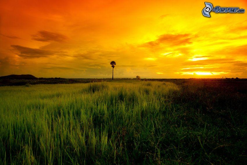 savana, tramonto, cielo giallo