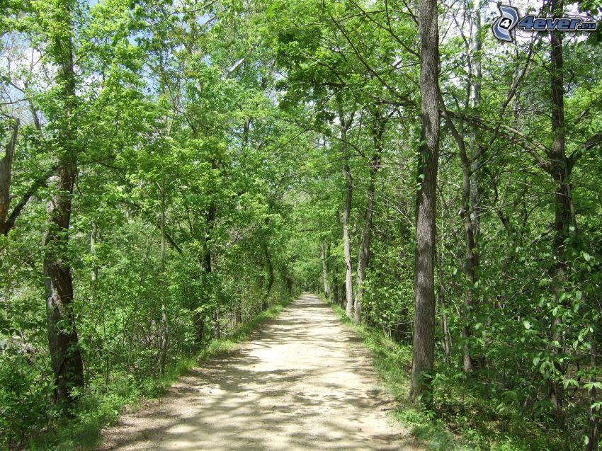 sentiero nel bosco, Alberi verdi