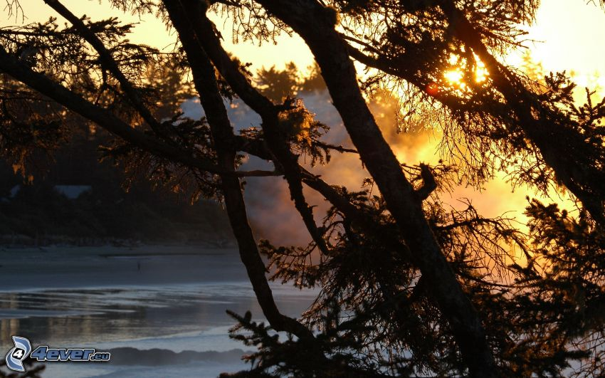siluette di alberi, fiume congelato, sole