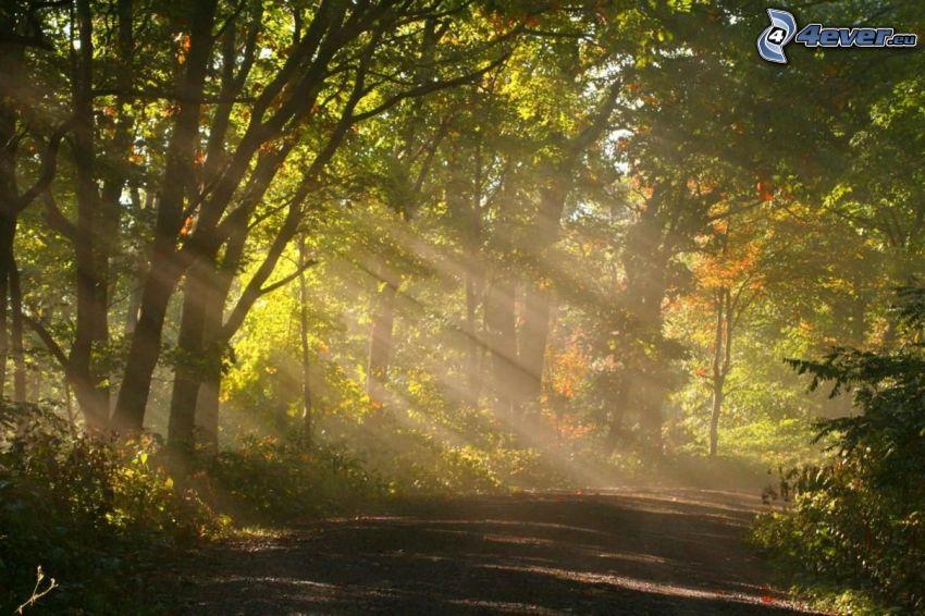 strada forestale, raggi del sole