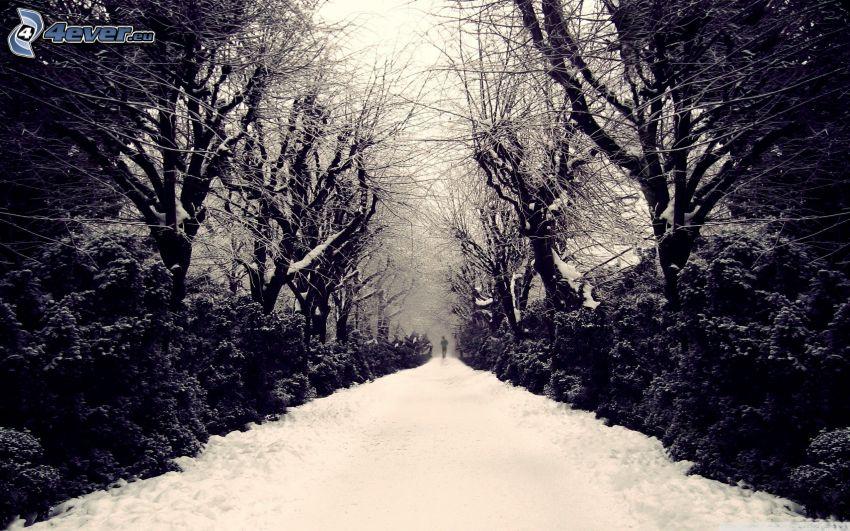 strada innevata, alberi coperti di neve