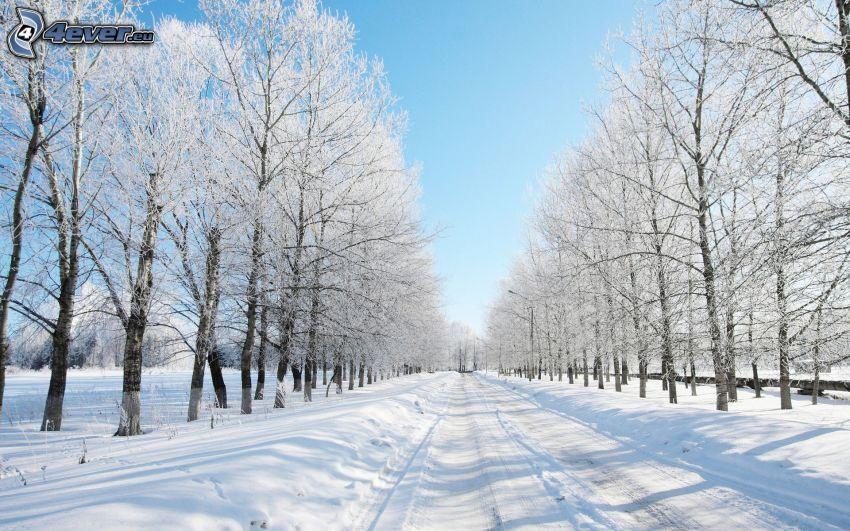 strada invernale, alberi coperti di neve