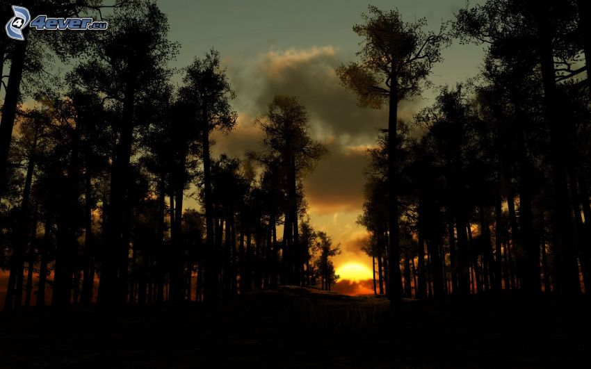 tramonto, bosco scuro