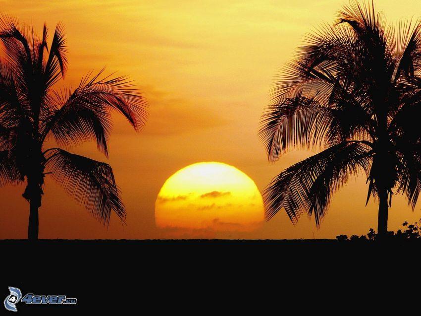 tramonto, palme