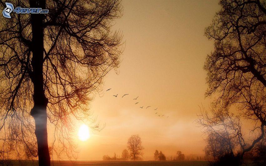 tramonto, siluette di alberi, uccelli