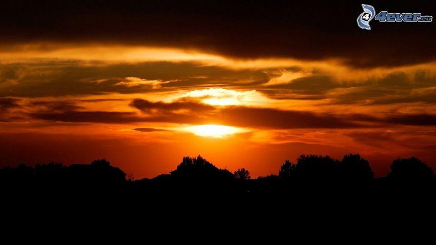 tramonto arancio, siluette di alberi