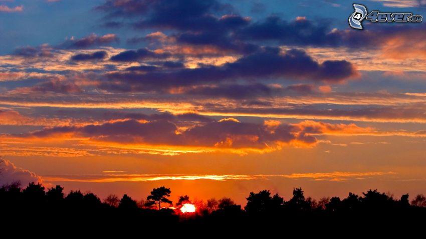 tramonto dietro il bosco, cielo di sera, nuvole
